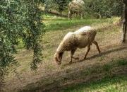 in campagna a contatto con la natura