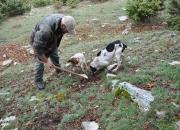 alla ricerca del tartufo con cani addestrati